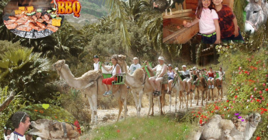 Camel safari with barbecue