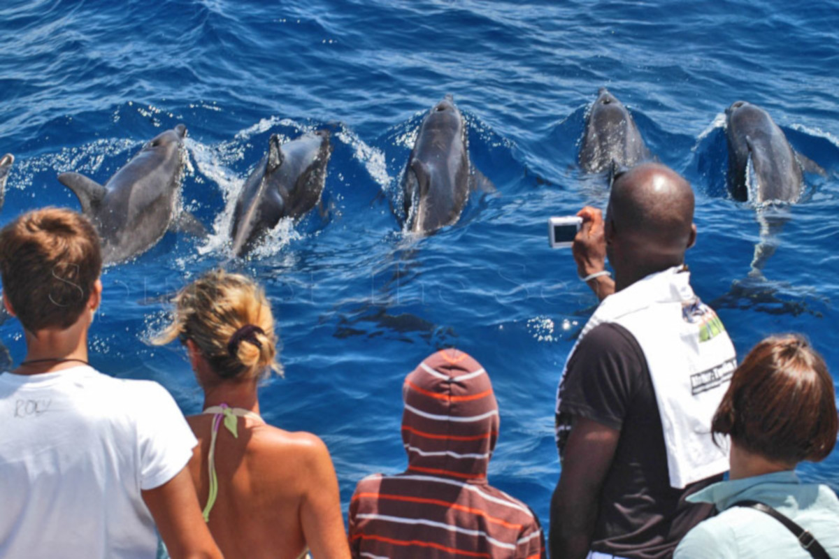 Dolphin and whale search